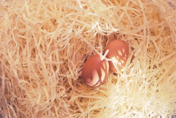 huevos alimentación saludable