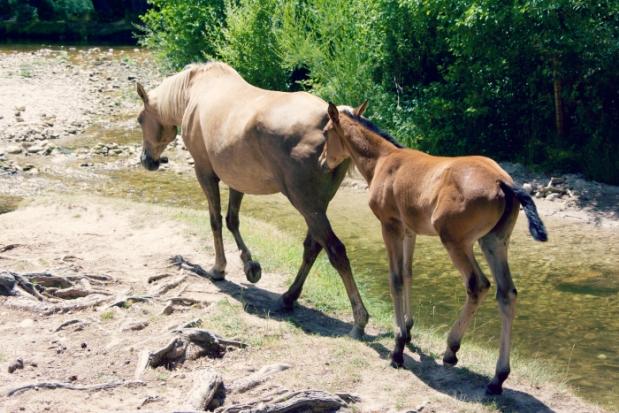 caballos en sierra de madrid escapada con niños  ola de calor